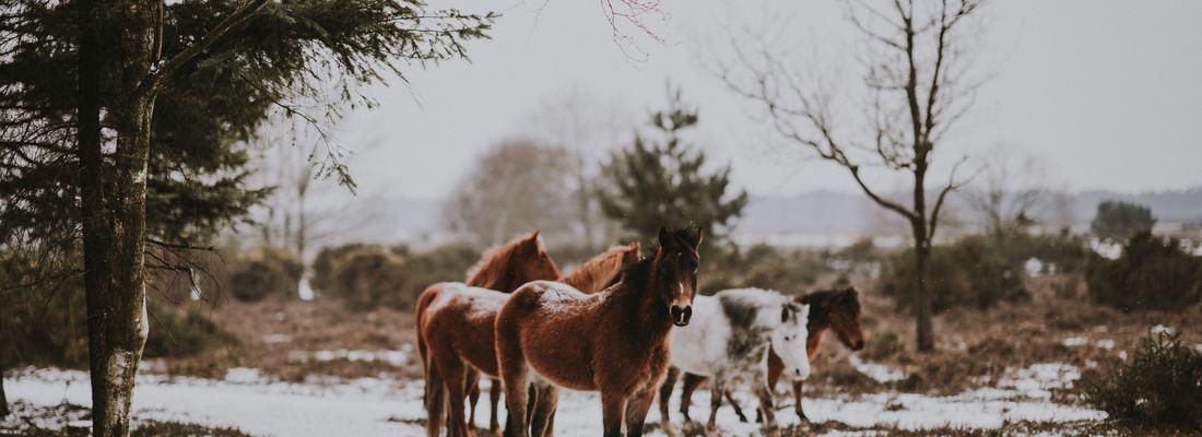 Balade à cheval Toulouse