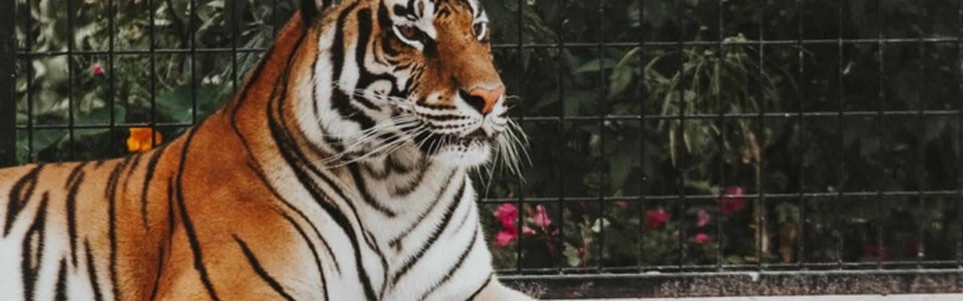 Zoo Occitanie